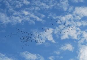 Zugvögel 07_03_2015